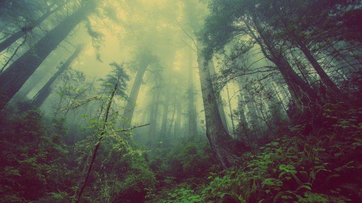 自然が人間の集中力を高める?バイオフィリア効果と集中力の関係