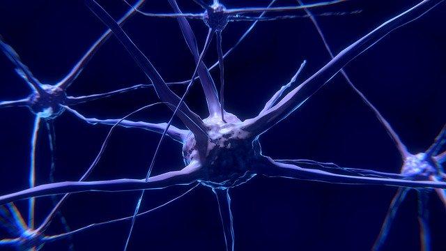 自律神経のイメージ